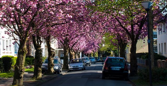 Don't Let Pollen, Sap Sabotage Car Luster